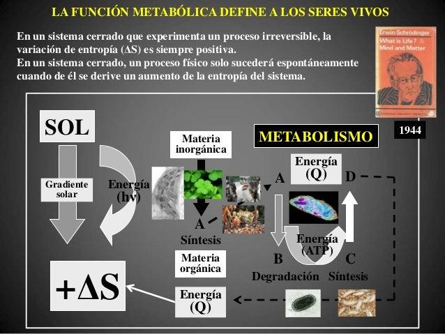 LA ESTRUCTURA COMPLEJA SOPORTA LA FUNCIÓN METABÓLICA 1000nm ≈500nm ≤ 300nm Rickettsias ArqueasMicobacterias Virus tradicio...