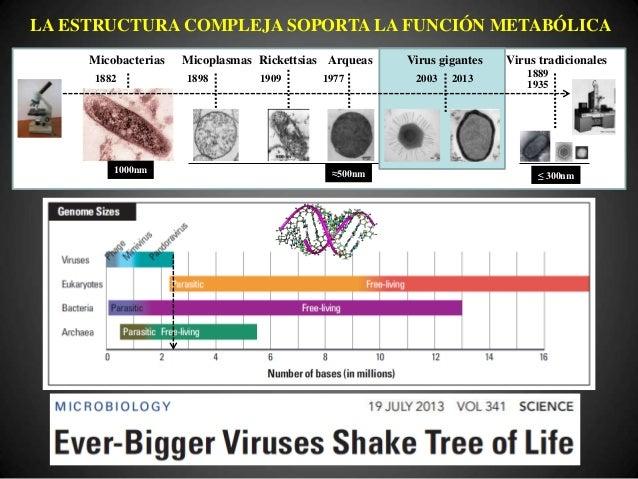© J.M. Echevarría, 2011 TIPO VARIANTE IDENTIDAD Conservación Variación EVOLUCIÓN DIVERSIDAD Mutación Recombinación Selecci...