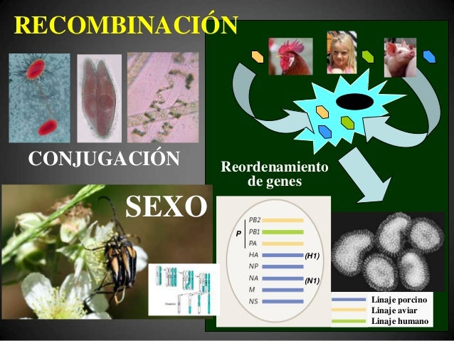 © J.M. Echevarría, 2009 +ΔS