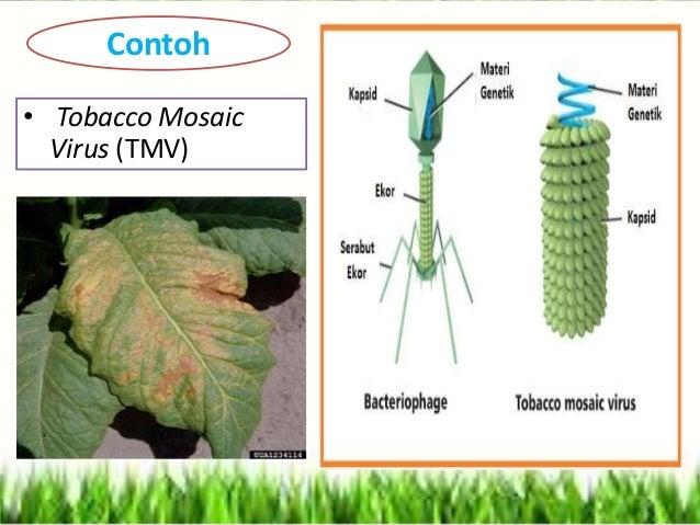 Slide Tentang Virus Mata Kuliah Mikrobiologi Pertanian