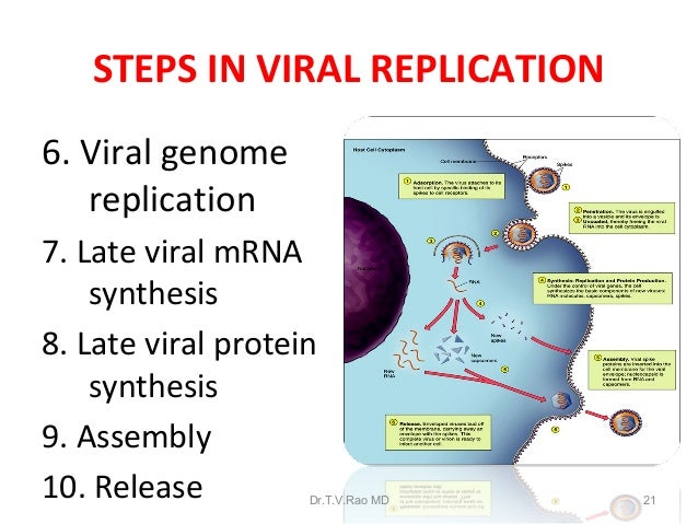 Virus structure and replication