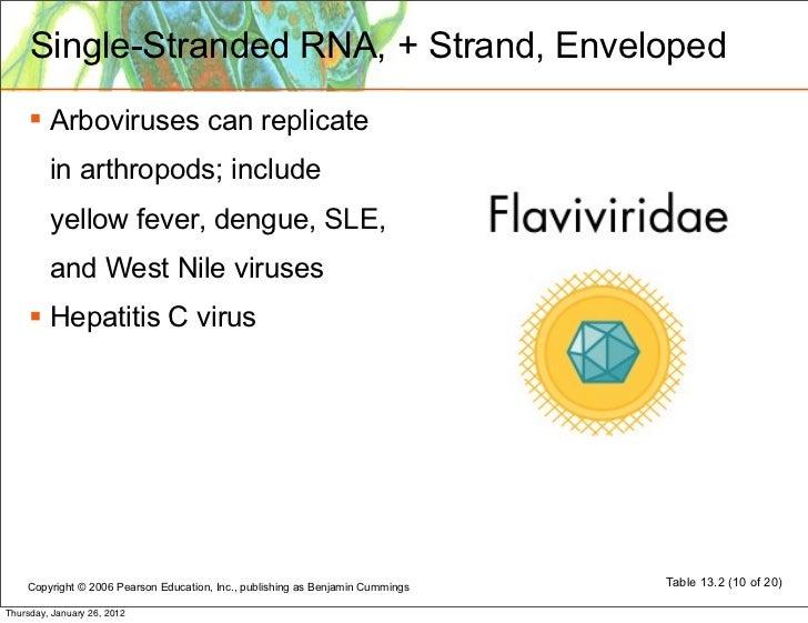Virus structure: classification: replication Coronavirus Replication