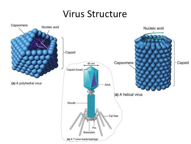 the rabies virus and treatment essay Rabies virus infects the central nervous system, resulting in progressive encephalopathy and ultimately death in an infected human mended following exposure to a potentially rabid animal and involves treatment of wound.