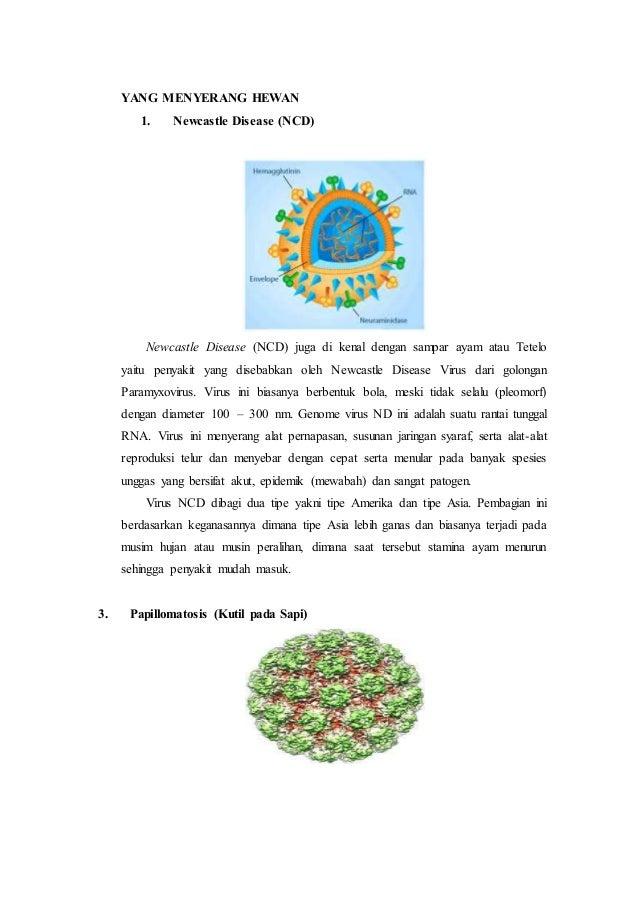 Virus Yang Merugikan Manusia Hewan Dan Tumbuhan