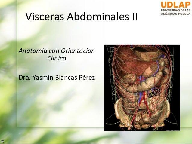 Visceras Abdominales IIAnatomia con Orientacion        ClinicaDra. Yasmin Blancas Pérez