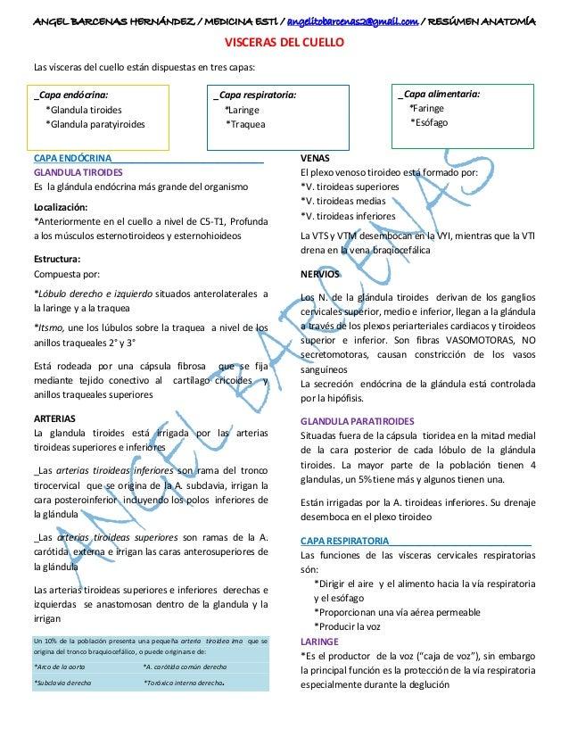 VÍSCERAS DEL CUELLO / ANATOMÍA I / MOORE / PAG.1018 / LO QUE DEBES SA…