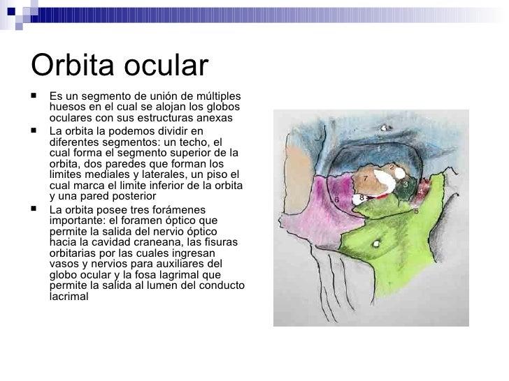 Viscerocraneo for Paredes orbitarias