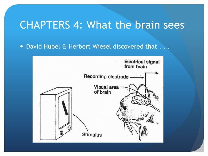 CHAPTERS 4: What the brain sees<br />David Hubel & Herbert Wiesel discovered that . . . <br />