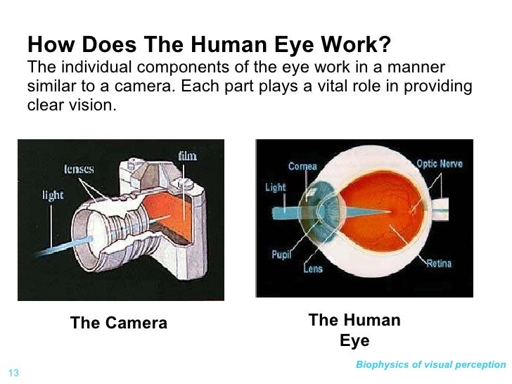 Visionbf 1h fin anatomy of eye 13 how does the human eye work ccuart Choice Image