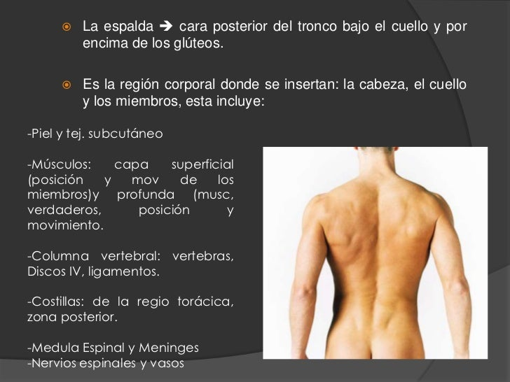 Vision general de la espalda y columna vertebral