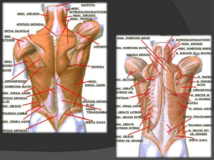 Los dolores después de la defecación en el lado derecho que dan en la espalda