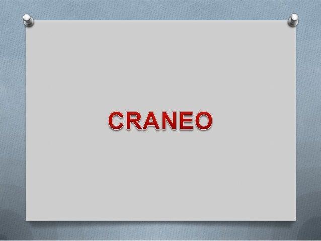 FACIAL               EXTERN                           A LATERA                                 anterior            CRANEOO...