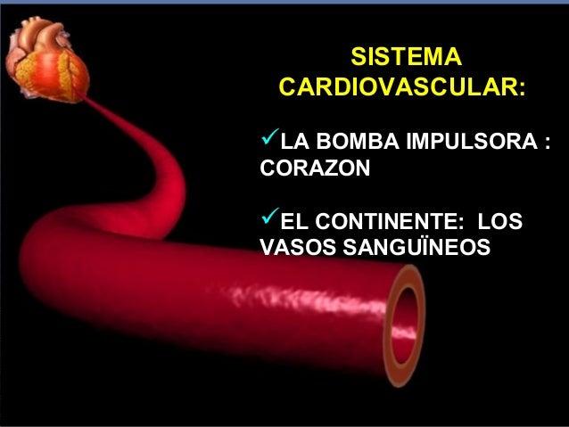 Vision panor mica sistema cardiovascular subsistemas - Continente y contenido ...