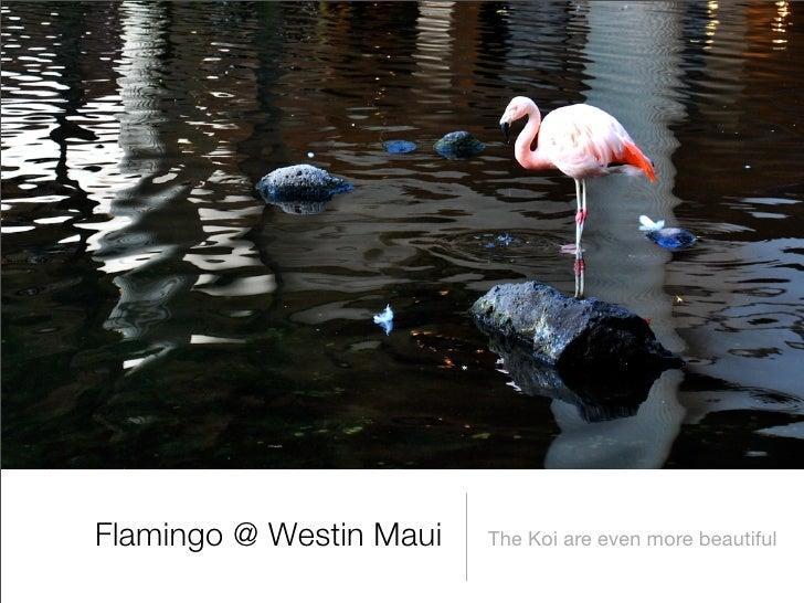 Flamingo @ Westin Maui   The Koi are even more beautiful