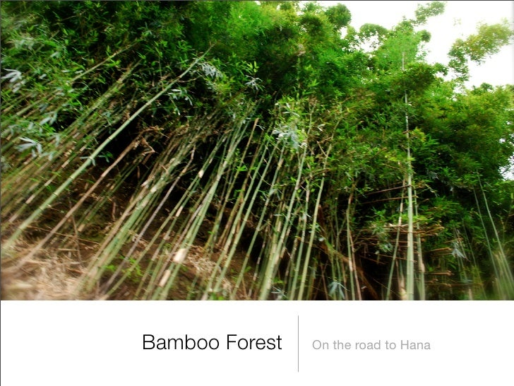 Bamboo Forest   On the road to Hana