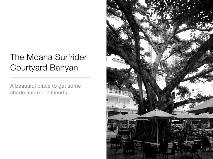 The Moana Surfrider Courtyard Banyan A beautiful place to get some shade and meet friends