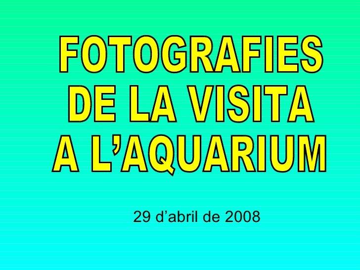 29 d'abril de 2008 FOTOGRAFIES  DE LA VISITA A L'AQUARIUM