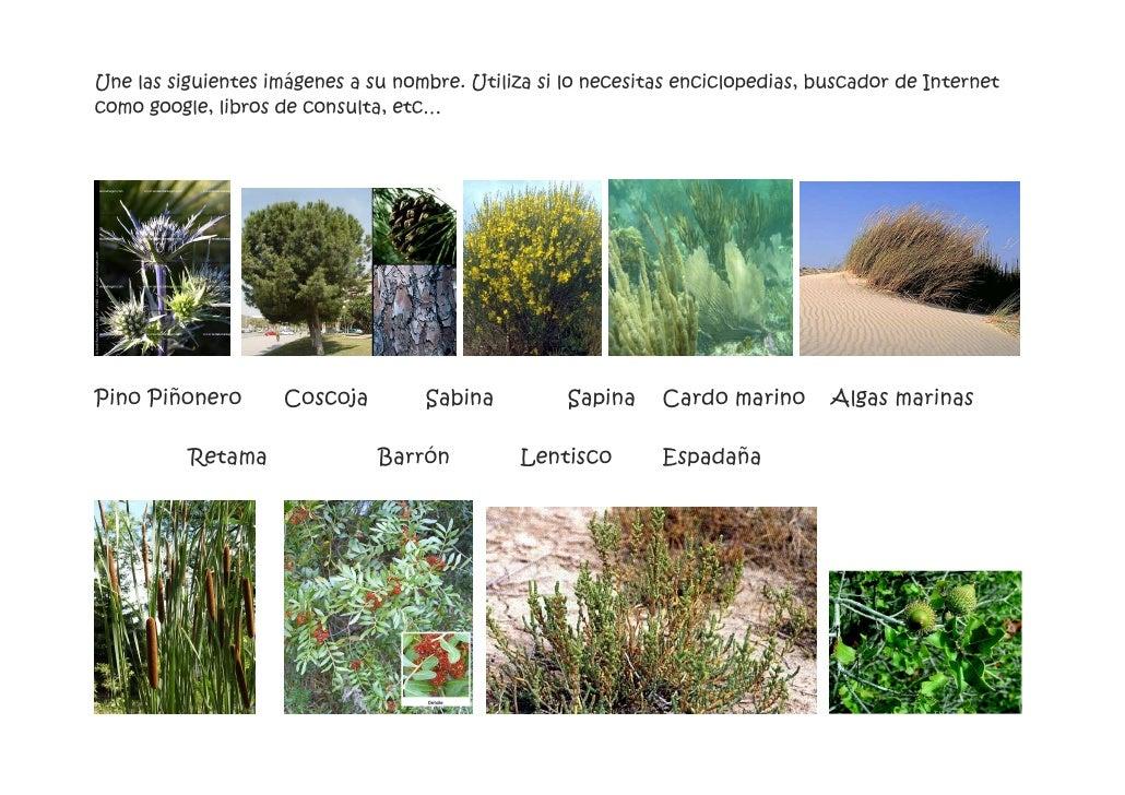 Visita al jard n bot nico actividades for Actividades jardin botanico