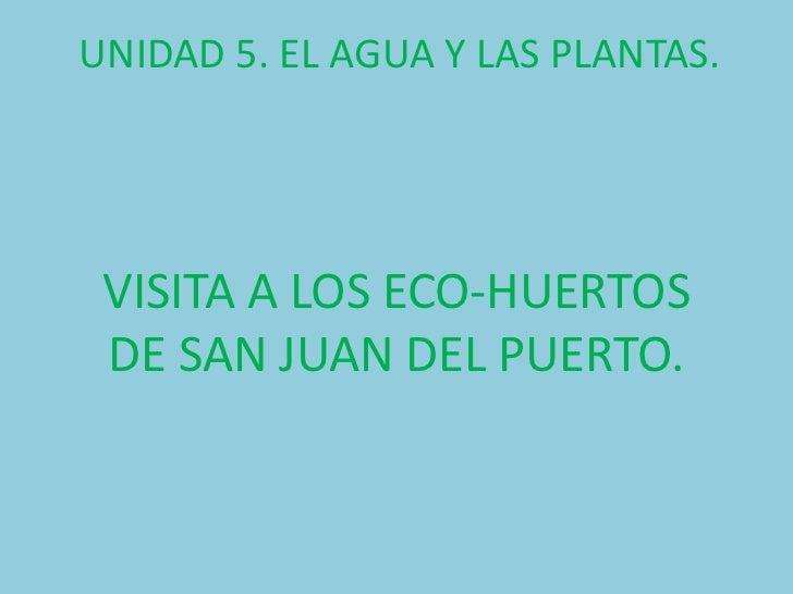 UNIDAD 5. EL AGUA Y LAS PLANTAS. VISITA A LOS ECO-HUERTOS DE SAN JUAN DEL PUERTO.