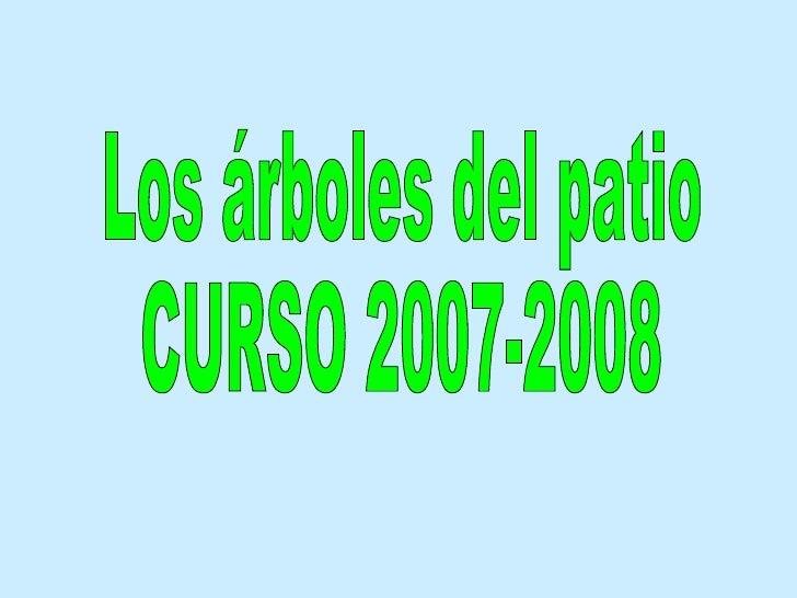 Los árboles del patio CURSO 2007-2008