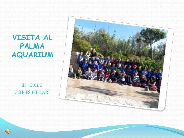 VISITA AL  PALMAAQUARIUM   1r   CICLECEIP ES PIL·LARÍ