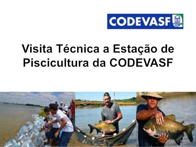  A Codevasf é uma empresa pública vinculada ao Ministério da Integração Nacional que promove o desenvolvimento e a revita...