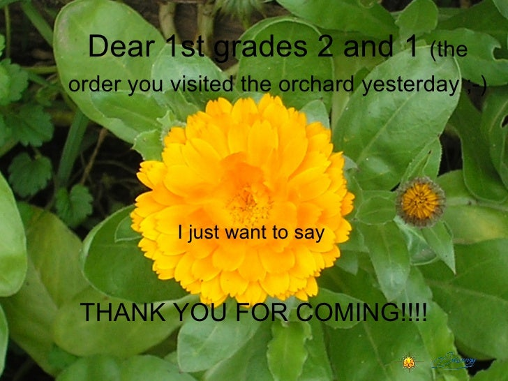Dear 1st grades 2 and 1  (the order you visited the orchard yesterday ;-)   I just want to say  THANK YOU FOR COMING!!!!