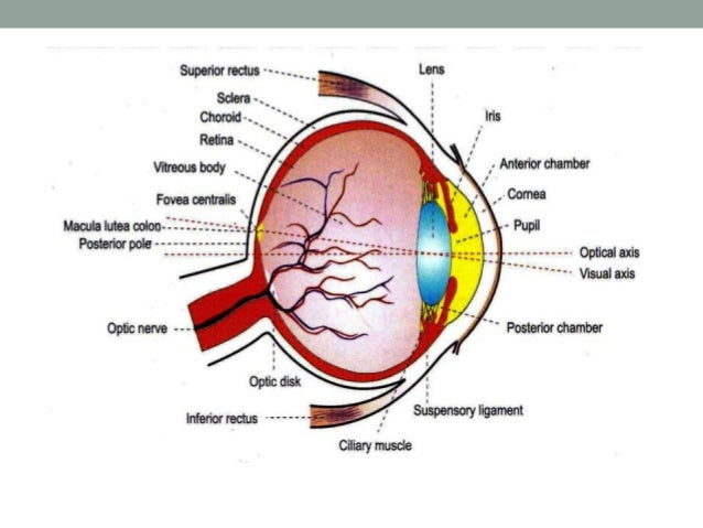 Visual Acuity Lens And Fundus Oculi