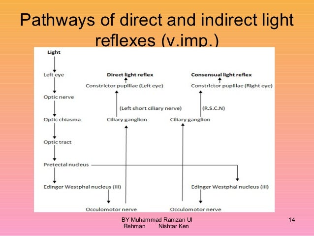 Visual Field Defects And Light Reflex