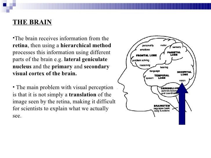 a study of visual sensation and perception Study 181 test 4: sensation and perception flashcards from gabrielle d on studyblue.