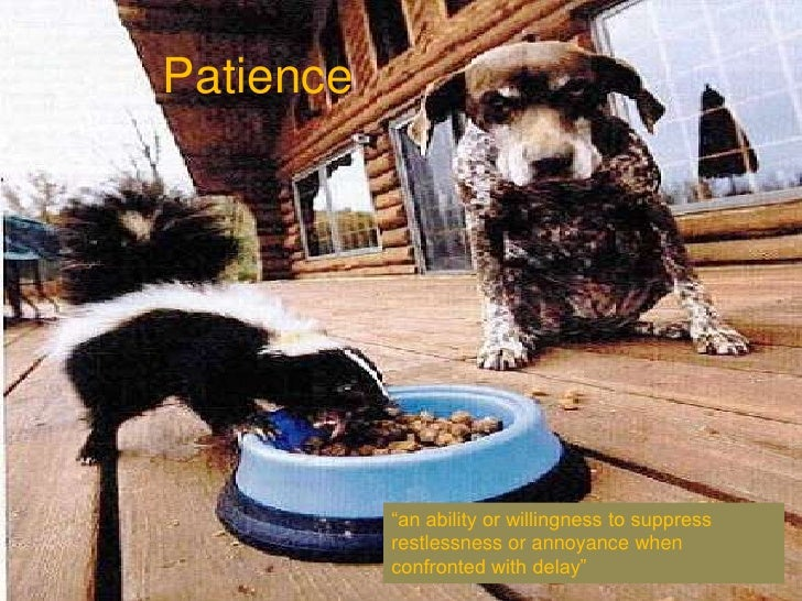 """Patience<br />""""an ability or willingness to suppress restlessness or annoyance when confronted with delay""""<br />"""
