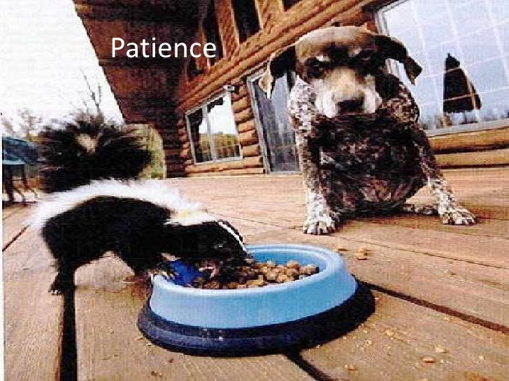 Patience<br />