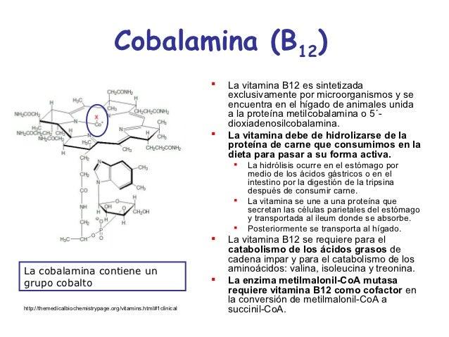 celulas que sintetizan esteroides