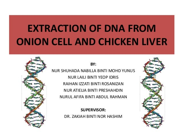 dna extraction from onion conclusion