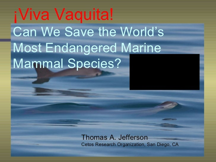 ¡Viva Vaquita!   Can We Save the World's Most Endangered Marine Mammal Species? Thomas A. Jefferson Cetos Research Organiz...