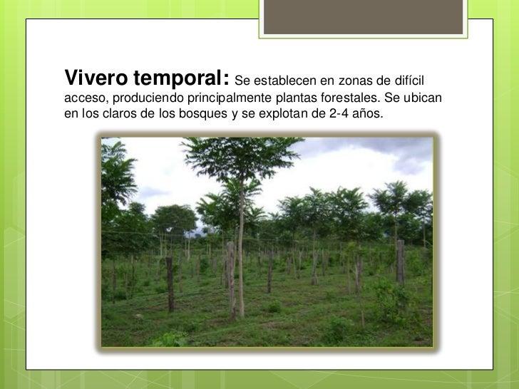 Vivero for Construccion de viveros forestales