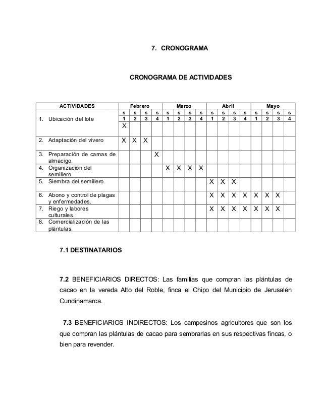 Vivero de cacao for Estructura vivero