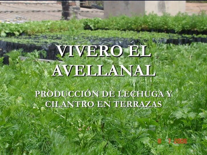 Vivero el avellanal presentacion for Vivero el ceibo