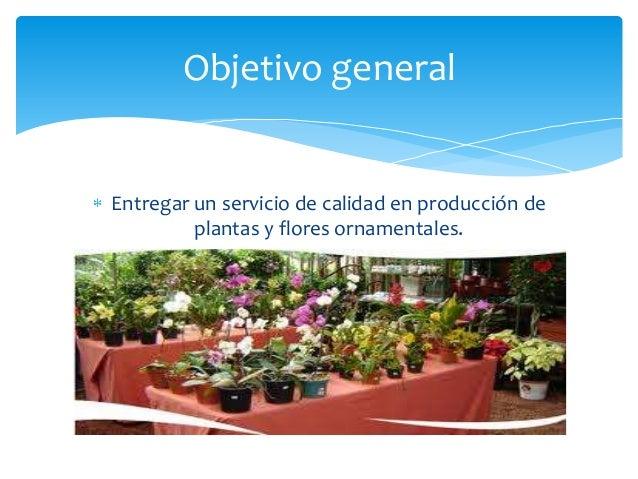 Vivero mi jardin for Vivero mi planta