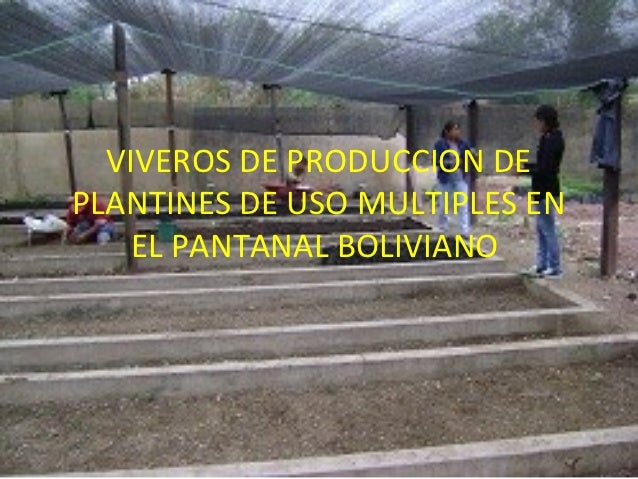 Viveros de produccion de plantines de uso multiples for Produccion de viveros