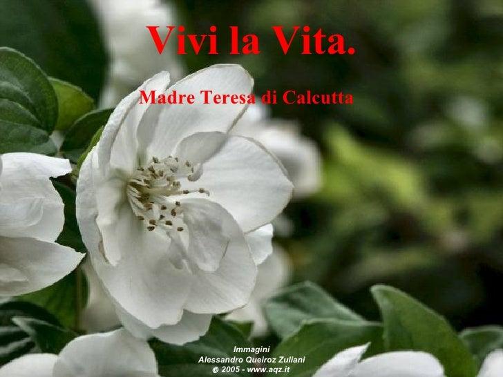 Vivilavita