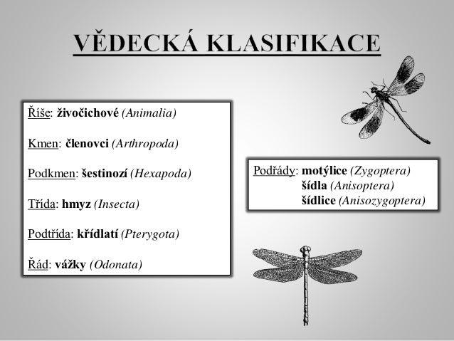 Vážky Slide 2