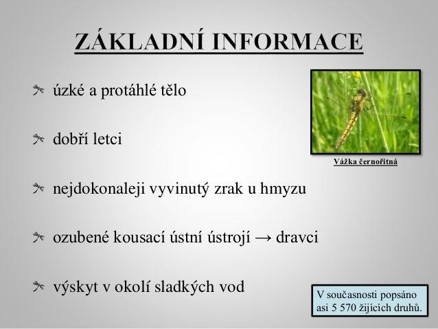 Vážky Slide 3