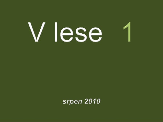 V lese 1 - srpen 2010 (in the forest)