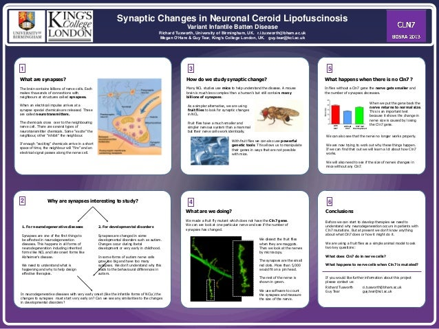 Synaptic Changes in Neuronal Ceroid Lipofuscinosis Variant Infantile Batten Disease Richard Tuxworth, University of Birmin...