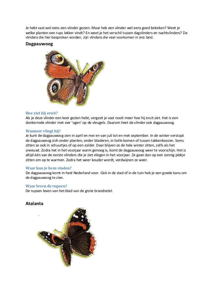 Je hebt vast wel eens een vlinder gezien. Maar heb een vlinder wel eens goed bekeken? Weet jewelke planten een rups lekker...