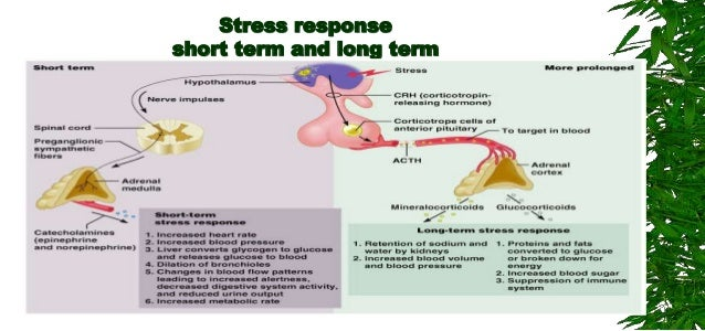 Short Term Stress : Neurobiology of stress