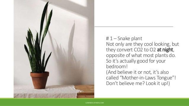 Five Easiest Feng Shui Plants