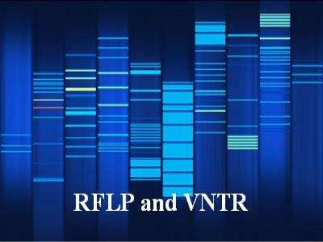 VNTR and RFLP