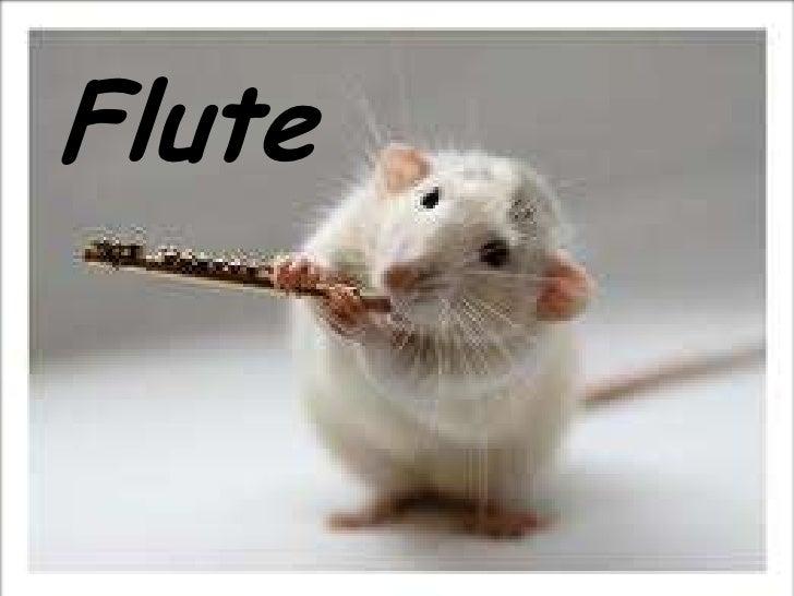 Flute<br />